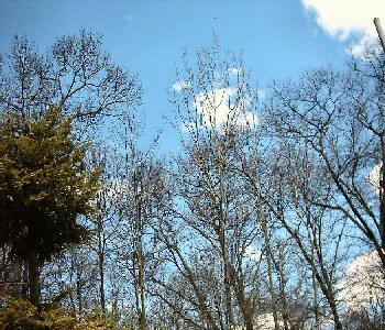 swansea_trees