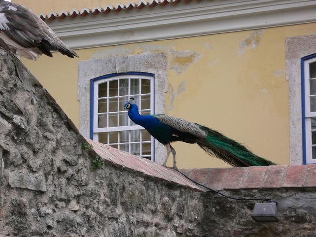 Castelo_de_sao_jorge_e_saos_house_018_1
